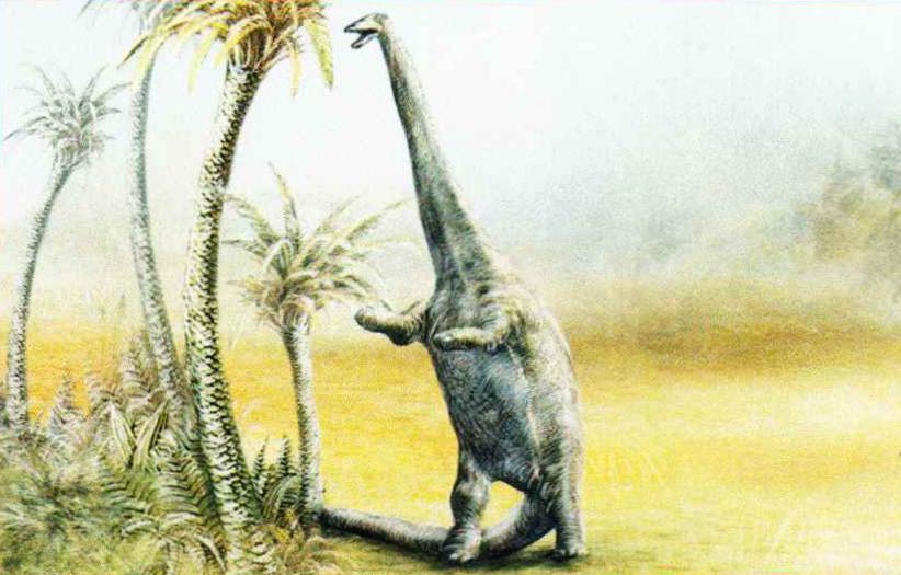 Не имея возможности дотянуться до самых верхних и сочных веток, ящер вставал на задние лапы, а массивный хвост служил ему опорой.